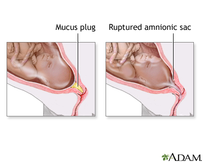 Mucus plug safe sex after